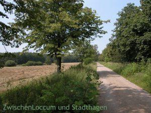 """Pilgerweg Loccum-Volkenroda: Auf Etappe 1 von Loccum nach Pollhagen (ca. 15 km): """"... , lass deine Augen offen sein, ..."""" @ Loccum"""