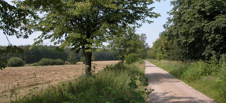 """Pilgerweg Loccum-Volkenroda: Auf Etappe 1 von Loccum nach Pollhagen (ca. 15 km): """"… , lass deine Augen offensein,…"""""""